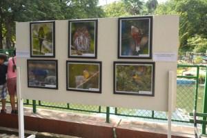 Festival el Arte en la Naturaleza tendiendo puentes